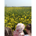 Trip to White Quarry Farm
