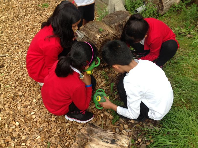 Team work to search for minibeasts.