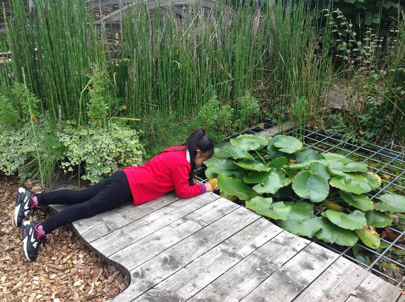 """""""There were tadpoles in here when I waas in Year 1, I'm looking to see what's there now."""""""