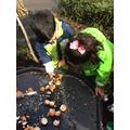 Investigating and cracking eggshells for composting