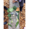 Using forest school for science