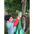 Finding the right branch on which to hang our hammock