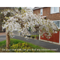 A beautiful blossom tree, can you find another?