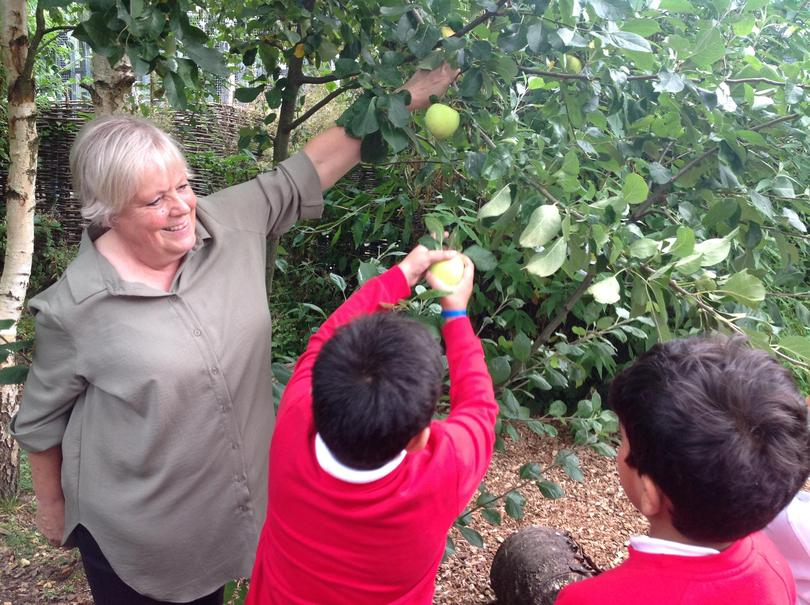We picked the apples from the tree.