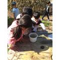 Examining our tadpoles