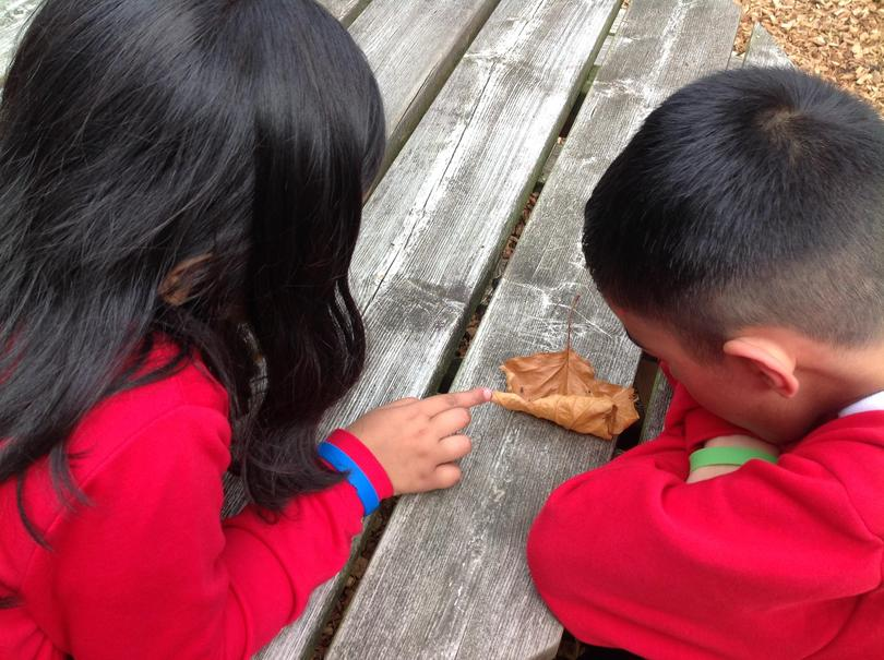 """""""A spider has made a web in this leaf."""""""