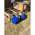 Looking after the rabbits