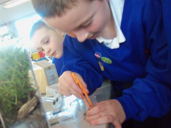 Looking for woodlice