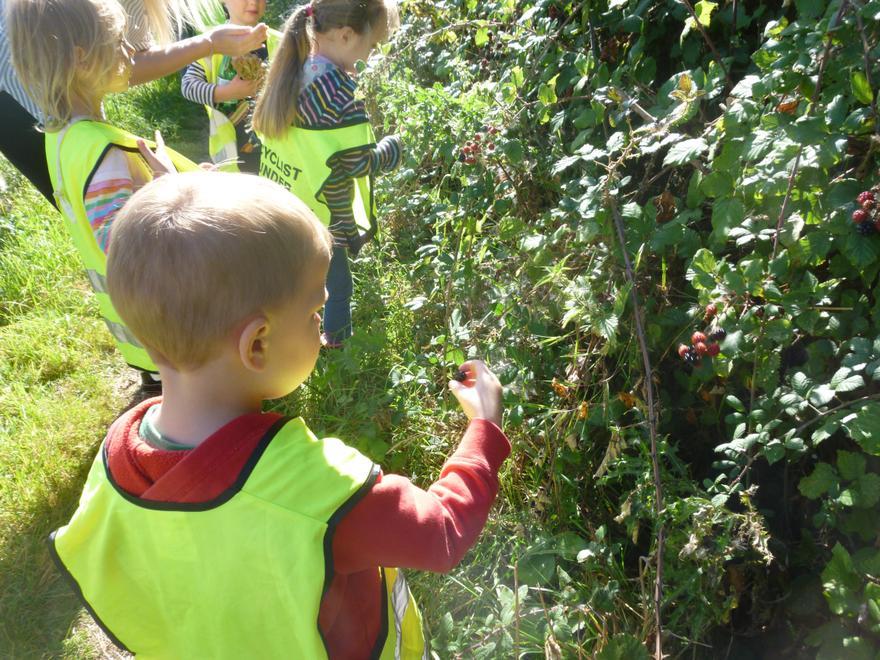 We picked blackberries.