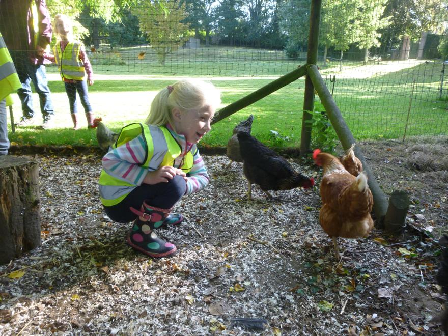 We looked closely at the hens.