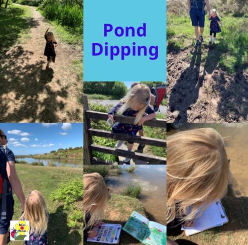 Pond dipping fun in the sun!