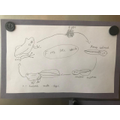 Samuel's life cycle of a frog