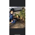 Evie gardening
