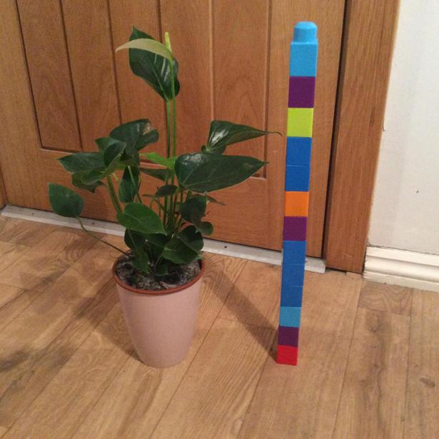 How tall is the plant?