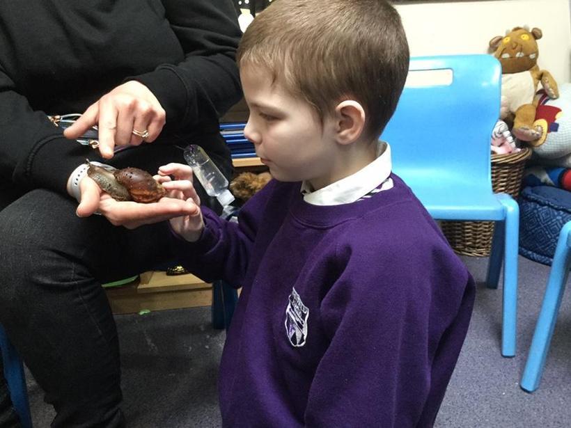 wow a snail!