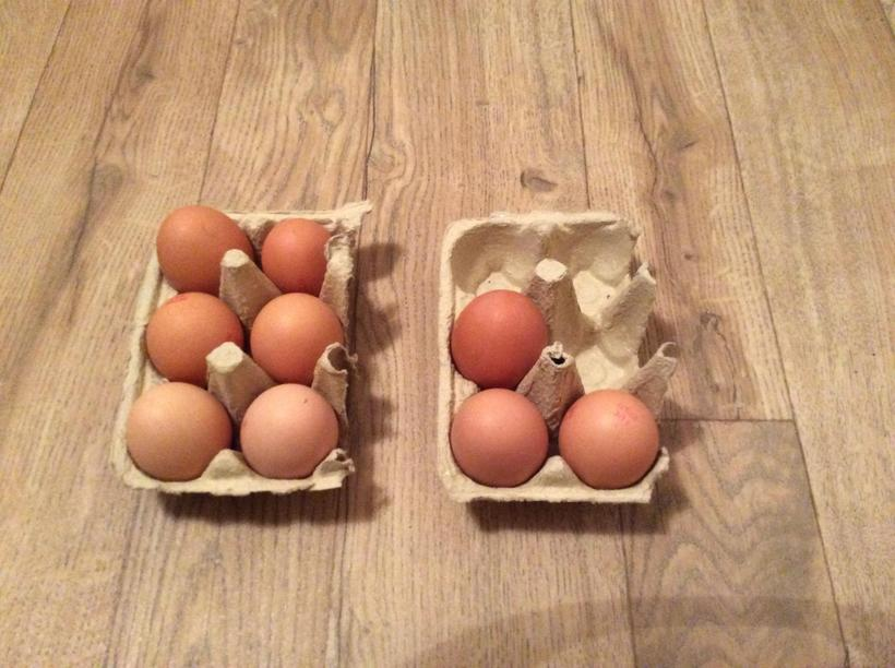 How many eggs altogether? 6 + 3 = ?