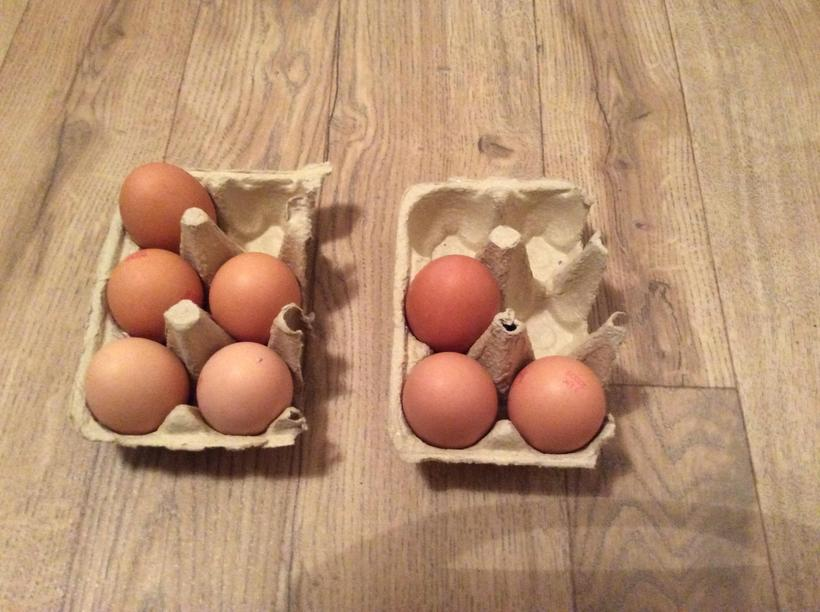 How many eggs altogether? 5 + 3 = ?