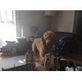Arwen and Rafe's dog - what a cutie!
