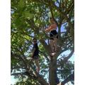 Tree Climbing Extraordinaire!