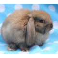 Toby's pet bunny, Lily