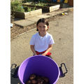 Yummy potatoes ready for cooking