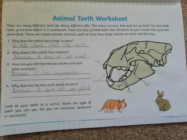 Brilliant understanding of animal teeth Henry J.
