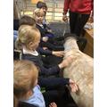 Meeting the sheep.