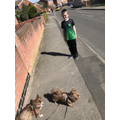 Lewis out on walk with his dogs