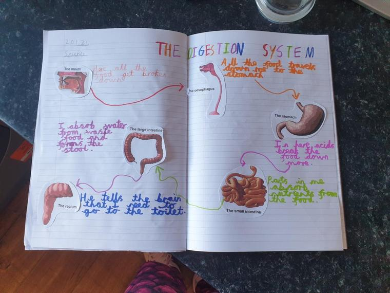 A brilliant colourful poster on the digestive system Henry M.