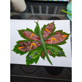 George K. has made a fantastic butterfly picture.