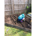 Holly helping to plant peas in the garden.