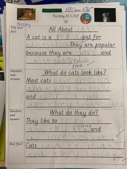 Some incredible writing all about cats!
