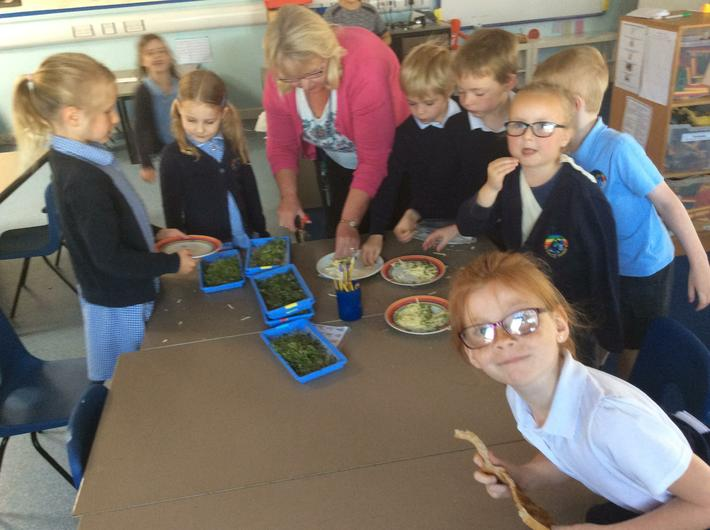 Growing and observing cress