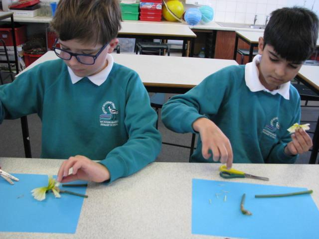 Carefully dissecting a flowering plant