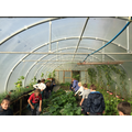 Group 1 enjoying the warmth of the polytunnel.
