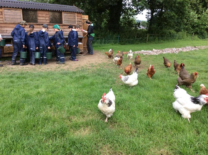 Looking after the chickens 🐓