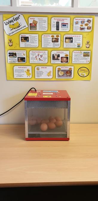 Living eggs arrived 3/2/2020
