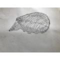 Eve's sketching