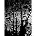 2nd: 'Monochrome Magic' by Levi L Year 6