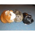 Hilda, Martha and Elsie ready for their photoshoot