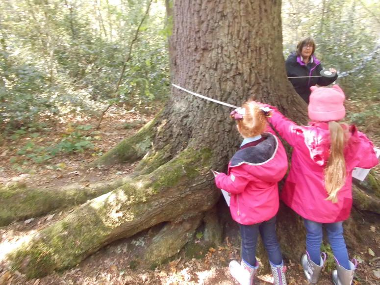 We measured trees!
