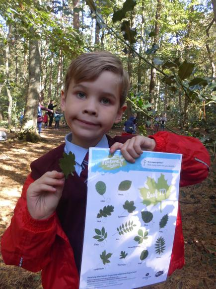 Identifying leaves was tricky!