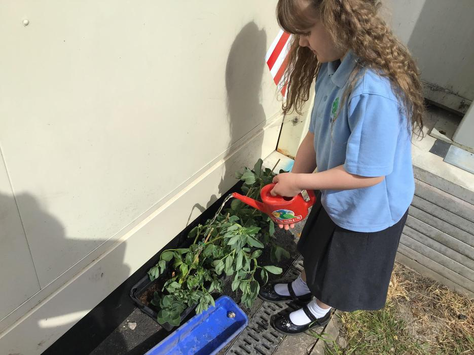 Alder Class your plants are in safe hands!