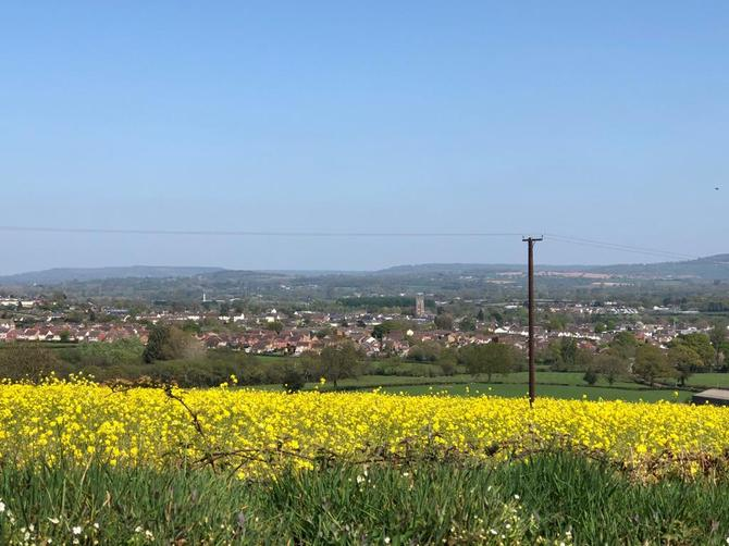 A view of Cullompton from Mrs Sullivan's walk – such a beautiful afternoon.