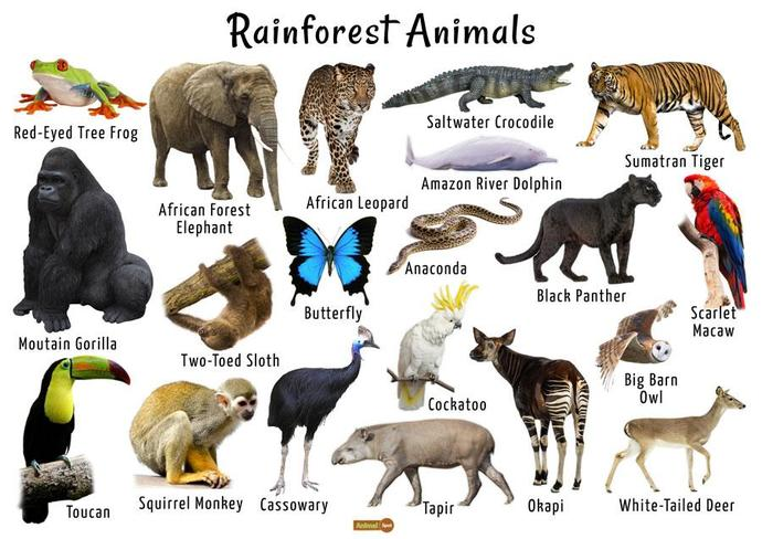 Use these animal category and word mats to help you with the matching habitat activity