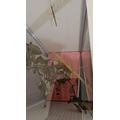 Stick insects' new home
