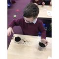 We planted sunflower seeds.