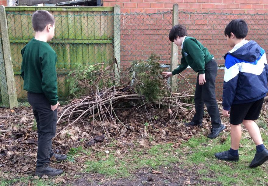 Creating a hedgehog den