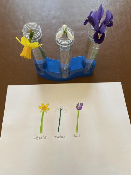 Josh's spring flower drawings