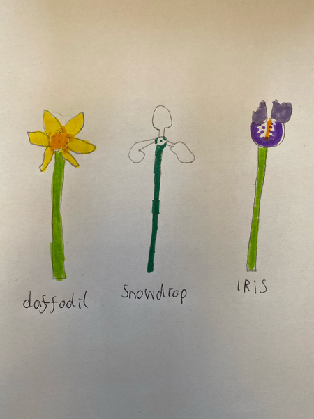 Josh's Observational drawing